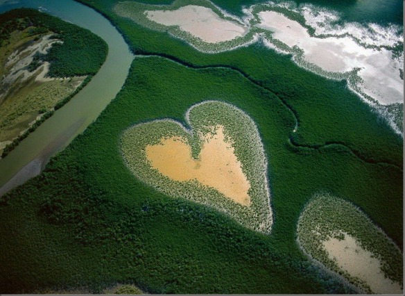a-heart-of-mangrove-trees-in-new-caledonia