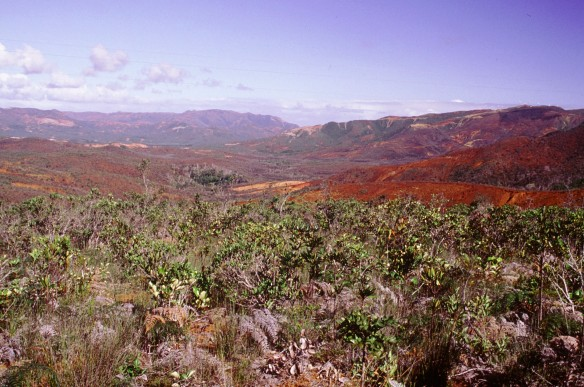 Maquis minier sur sol oxydique rouge issu de l'altération des péridotites.