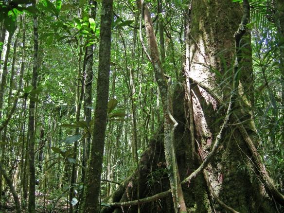 Forêt de Nouvelle-Calédonie