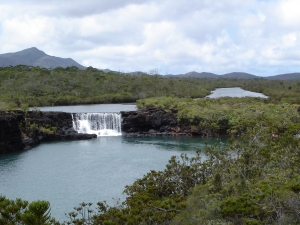 The margins of rivers and lakes are just one of the many botanically rich habitats of New Caledonia