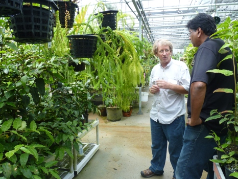 Conservatory Director Ron Determann (left) and Andre Chanderbali (right) of the Amborella Genome Project.  Amborella trichopoda grow on the bench to their left. Photo Hilary Hart